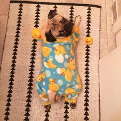 Doug The Pug is ready for night night