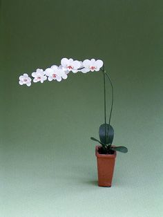 Moth Orchid Kit  for 1/12th