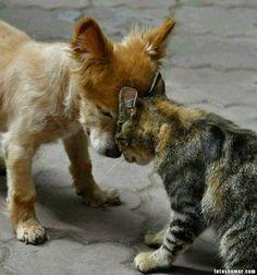 Humor Gráfico Humor grafico para el facebook: Perros contra gatos