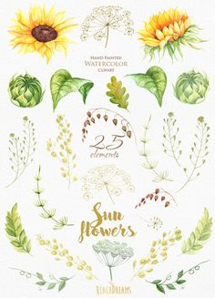 Sunflower Watercolor Flower clipart Separate от ReachDreams