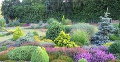 Google Image Result for http://www.bowleswyer.co.uk/blog/wp-content/uploads/2012/04/Dwarf-conifer-and-heathers.jpg