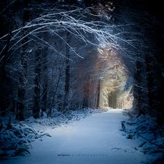 Enchanted Forest by Steve Deligan