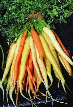 Google Image Result for http://0.tqn.com/d/gardening/1/0/L/8/carrot_rainbow.jpg