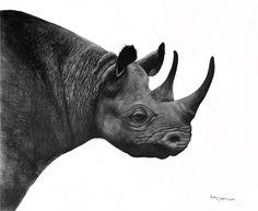 Charcoal drawings by Ashleigh Olsen, Drawing of Black Rhino, Black Rhino Drawing, African Art, Wildlife Art.