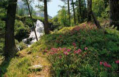 Il Parco Nazionale dello Stelvio è la più vasta area protetta delle Alpi italiane e rappresenta un'immensa distesa di verde che, ..
