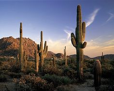 Scottsdale places