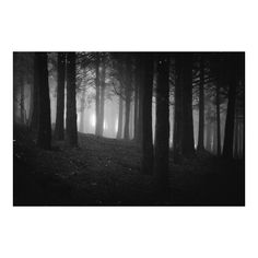 Diogo Pereira Dark Forest II (1,175 PHP) ❤ liked on Polyvore featuring backgrounds and pictures