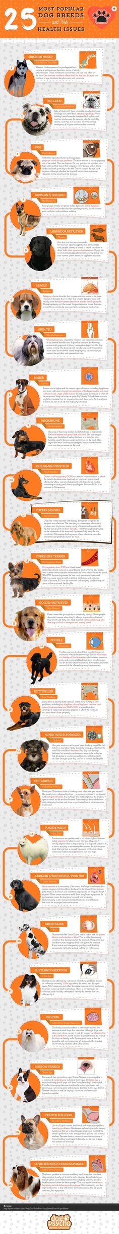 Common Health Problems in Six Popular Dog Breeds [Infographic]