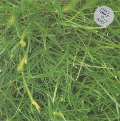 Orbital – Lush 3 (Internal) 1993 // Trance/Techno