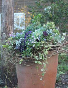 I love the way the wooody vine wraps around the pot Container Flowers, Container Plants, Container Gardening, Garden Junk, Garden Planters, Cafe Plants, Chicken Garden, Pot Jardin, Pot Plante