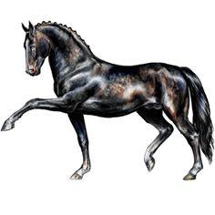 Старательный, Pferd Araber Dunkelbrauner #256386 - Howrse