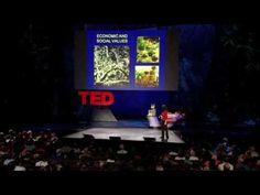 Nalini Nadkarni explores canopy worlds - YouTube