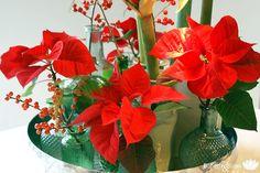 Wis jij dat . . . 12 december is het de Dag van de Kerstster