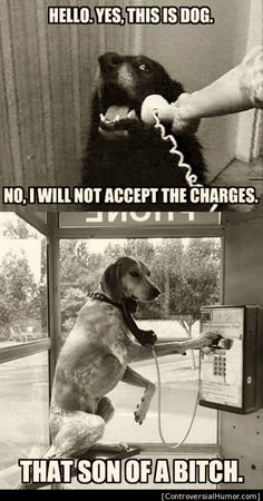 M.     ++++ I Will Not Accept Charges - http://controversialhumor.com/i-will-not-accept-charges/ #Dogs, #FunnyPictures, #Humor