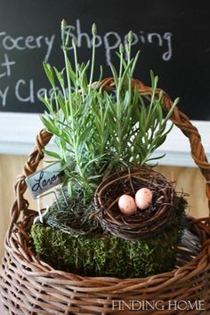 Lavender and nest... to welcome spring