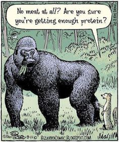 MYTH: A #PlantBased diet doesn't provide enough protein. Oh dear lol!