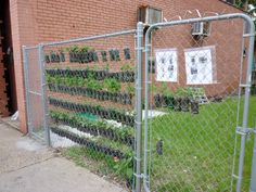 use 2 liter bottles attached to chain link fence for more vertical gardening space!