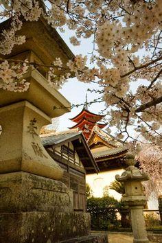 303Pixels: Cherry Blossoms, Hiroshima, Japan
