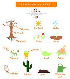 English vocabulary: growing plants. www.englisheverywhereforeveryone.com