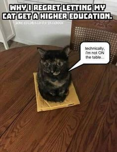 well educated cat...