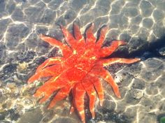 A beautiful starfish..on a gorgeous day...in the lovely Coastal Oregon town Newport!
