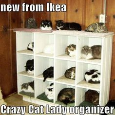Every crazy cat lady should have at least one - 2 or more is even better! I want all these kitties! You crazy cat lady! I Love Cats, Crazy Cats, Cute Cats, Crazy Cat Lady Meme, Adorable Kittens, Crazy Dog, Ikea Cat, Ikea Ikea, Animal Pictures