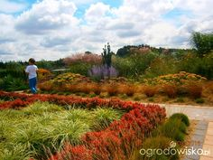 Moje małe królestwo - strona 276 - Forum ogrodnicze - Ogrodowisko
