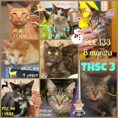 These adult males need a rescue or adoption ASAP. If you are a rescue or know a rescue that can help, please contact Hawkesbury Pound, NSW on (02) 4560 4644 (if no answer, leave a message) or email companionanimal@hawkesbury.nsw.gov.au