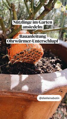 Planting Vegetables, Vegetable Garden, Handyman Projects, Potager Garden, Garden Projects, Home And Garden, Plants, Diy, Outdoor Life