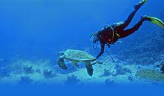 Plongée sous-marine, vacances, Plages et l'île de Havelock dans les îles d'Andaman et Nicobar | Tricolor Voyages Blog