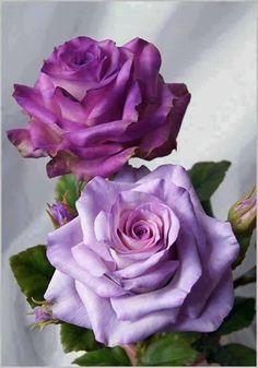 love these two shades of purple #purple #bebestu