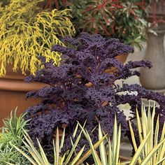 Article on winter pots..15 tips. follow pin