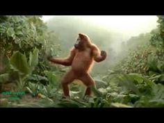 Monkey dancing turkish happy birthday song - YouTube