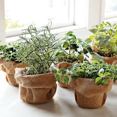 Cute way to disguise inexpensive, unattractive planters.