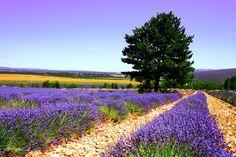 Sault - Vaucluse, France