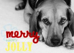 dog holiday Christmas greeting card, by Hey Love