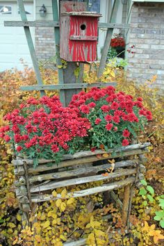Fall Decorating with Mums