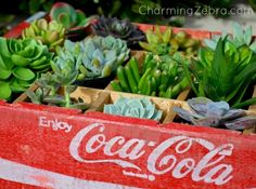Reuse a wood soda crate as a succulent planter.