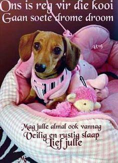 Pretty dachshund all in pink Dachshund Funny, Dachshund Puppies, Dachshund Love, Dogs And Puppies, Daschund, I Love Dogs, Puppy Love, Cute Dogs, Adoption