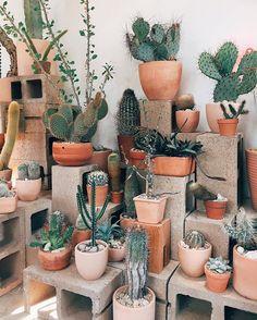 Cactus store in Echo Park, LA. Cactus store in Echo Park, LA Cacti And Succulents, Cactus Plants, Cactus Art, Cactus Decor, Succulent Terrarium, Cactus Garden Ideas, Outdoor Cactus Garden, Succulent Display, Cactus Drawing