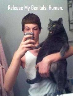 Kattenfoto gaat mis