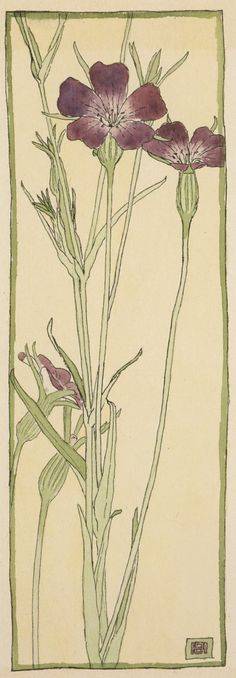 Corn Cockle (circa 1915). Watercolour and ink by Hannah Borger Overbeck (1870-1931).