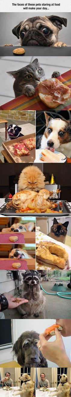 Funny Animals Looking At Food funny cute animals dogs cat cats adorable dog puppy animal kittens pets lol kitten humor funny animals