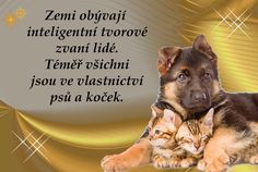 Carpe Diem, Animals And Pets, Humor, Words, Quotes, Art, Pets, Quotations, Art Background