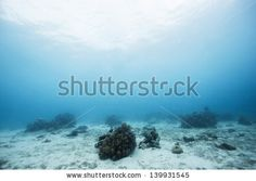 under the sea by littlesam, via ShutterStock Water Images, Underwater Photos, Under The Sea, Royalty Free Stock Photos, Pictures, Photos, Photo Illustration, Underwater Photography, Drawings