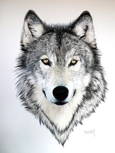 wolf with bright yellow eyes. - Gray wolf with bright yellow eyes. -Gray wolf with bright yellow eyes. - Gray wolf with bright yellow eyes. Wolf Tattoos, Fake Tattoos, Animal Tattoos, Horse Tattoos, Wolf Tattoo Design, Tattoo Designs, Tattoo Ideas, Wolf Design, Tattoo Artists Near Me
