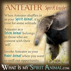 Get in-depth Anteater Symbolism & Meanings! Anteater as a Spirit, Totem, & Power Animal. Plus, Anteater in Far East & Native Animals and Dreams! Spirit Animal Totem, Animal Spirit Guides, Your Spirit Animal, Animal Meanings, Animal Symbolism, Dog Pictures, Animal Pictures, Spiritual Animal, Power Animal