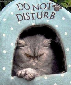Cat Really Means it - DO NOT DISTURB