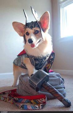 I shall call him: Thorgi