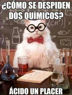 I don't know what it says, but screw it, it's science cat!!!!